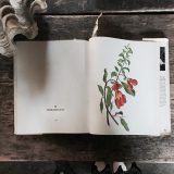 Flower picture book