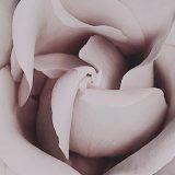 Cyclic petals