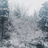 Snowy monde_02