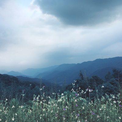 Montagne d'été