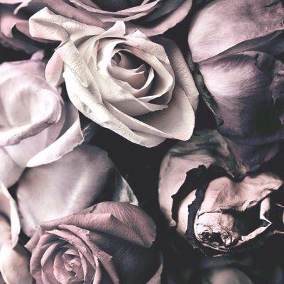 Couleur de fleur préférée