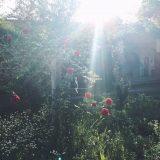 Jardin de roses ∮